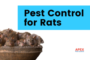 pest control for rats