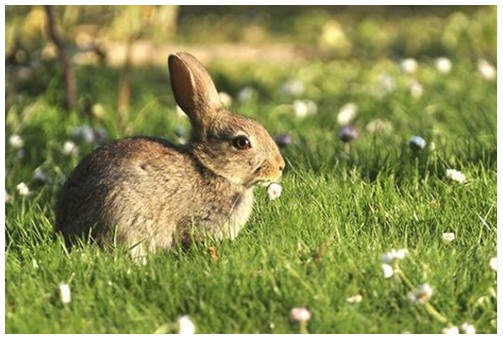How to tackle rabbits in a humane way