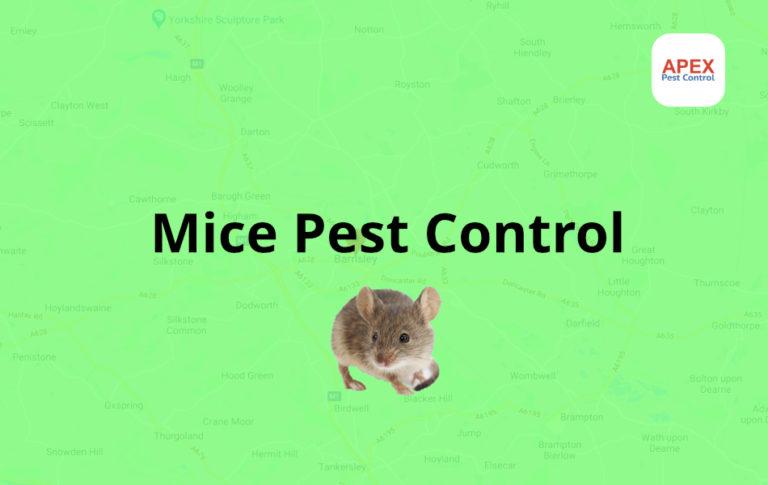 Mice Pest control Barnsley