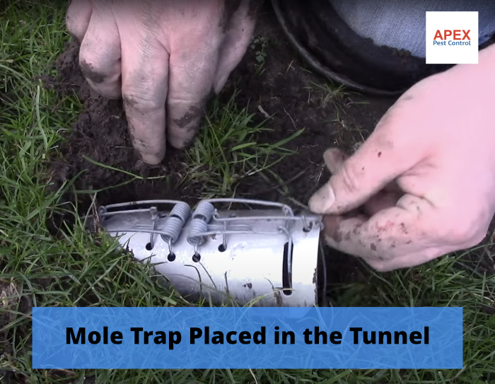 Mole catcher