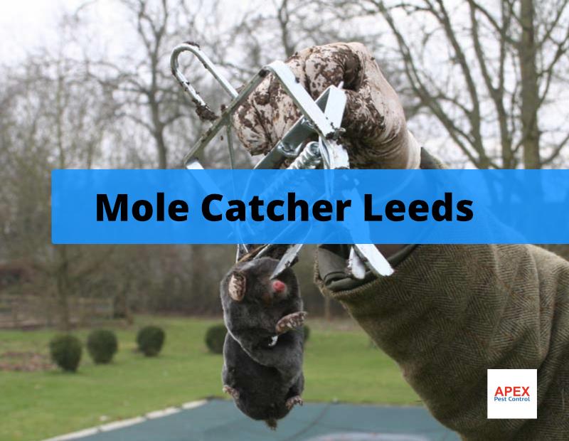 Moles Leeds