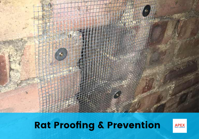 rat-proofing rodent protection