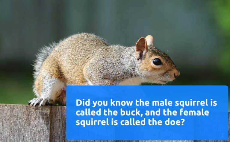 pest control squirrels facts