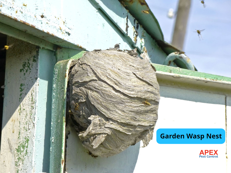 Wasp Nest Removal Sheffield nest in garden shed