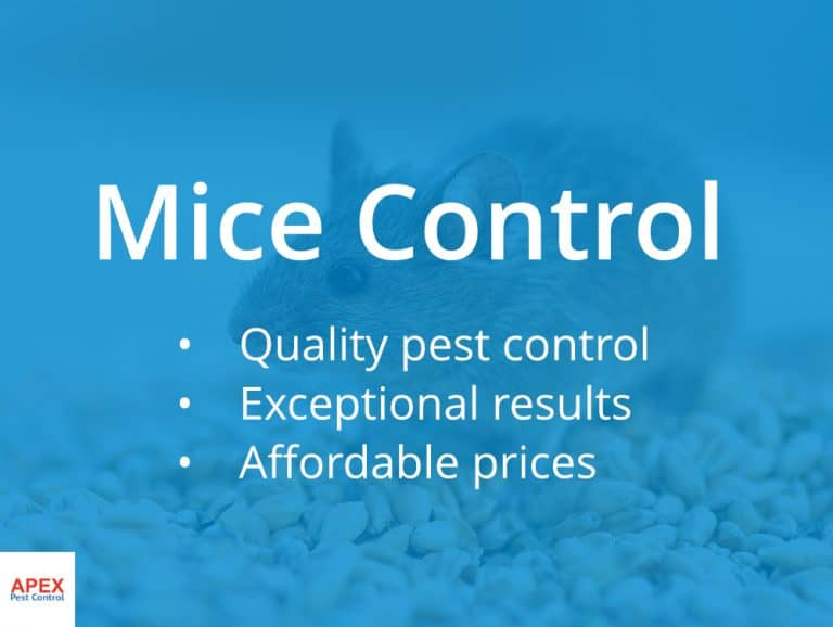 Mice control in Yorkshire