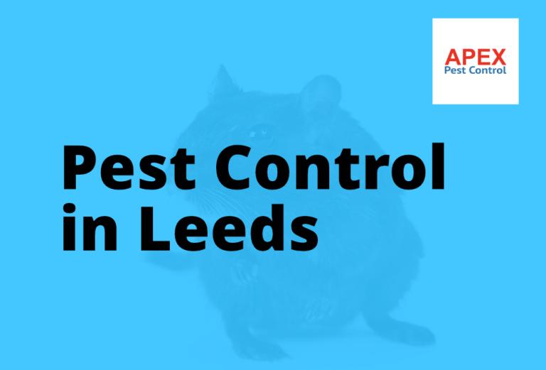 apex pest control in leeds