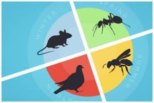 Apex pest control blog