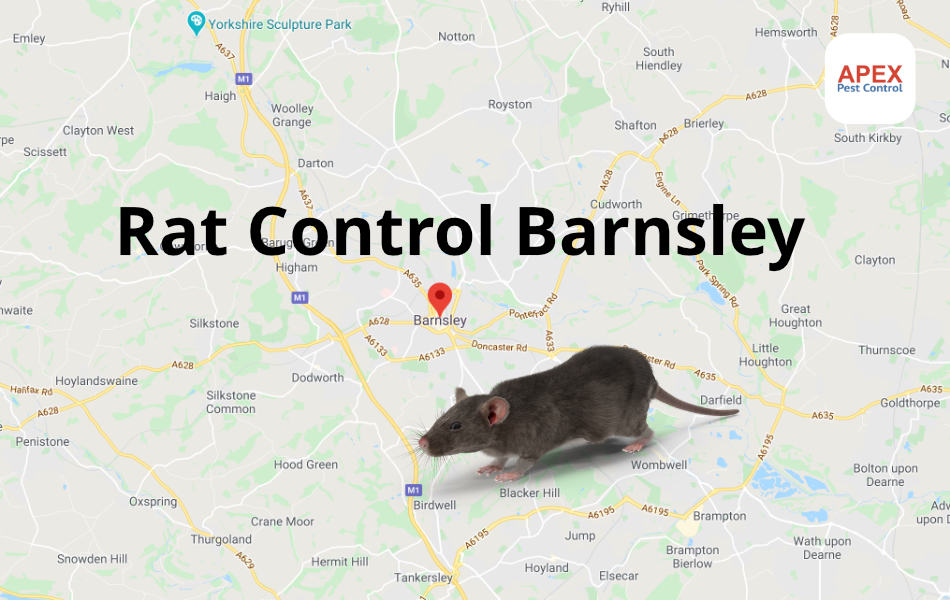 rat control Barnsley, South Yorkshire
