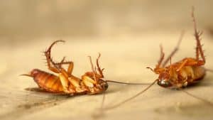 roach control how to get rid