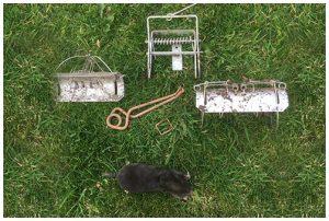 turf care and maintenance Moles